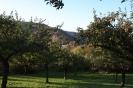 Obstbäume in Pützfeld